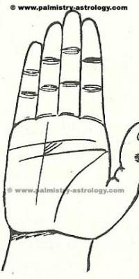 sun line palmistry astrology (43)
